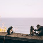 Monkeys by the sea