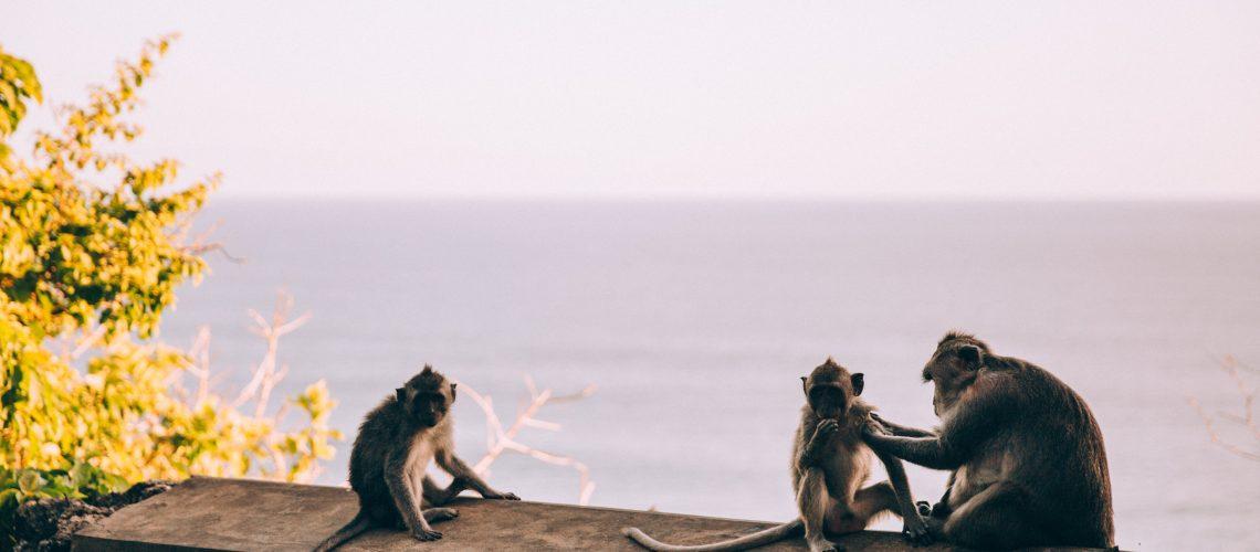 Monkeys by the sea